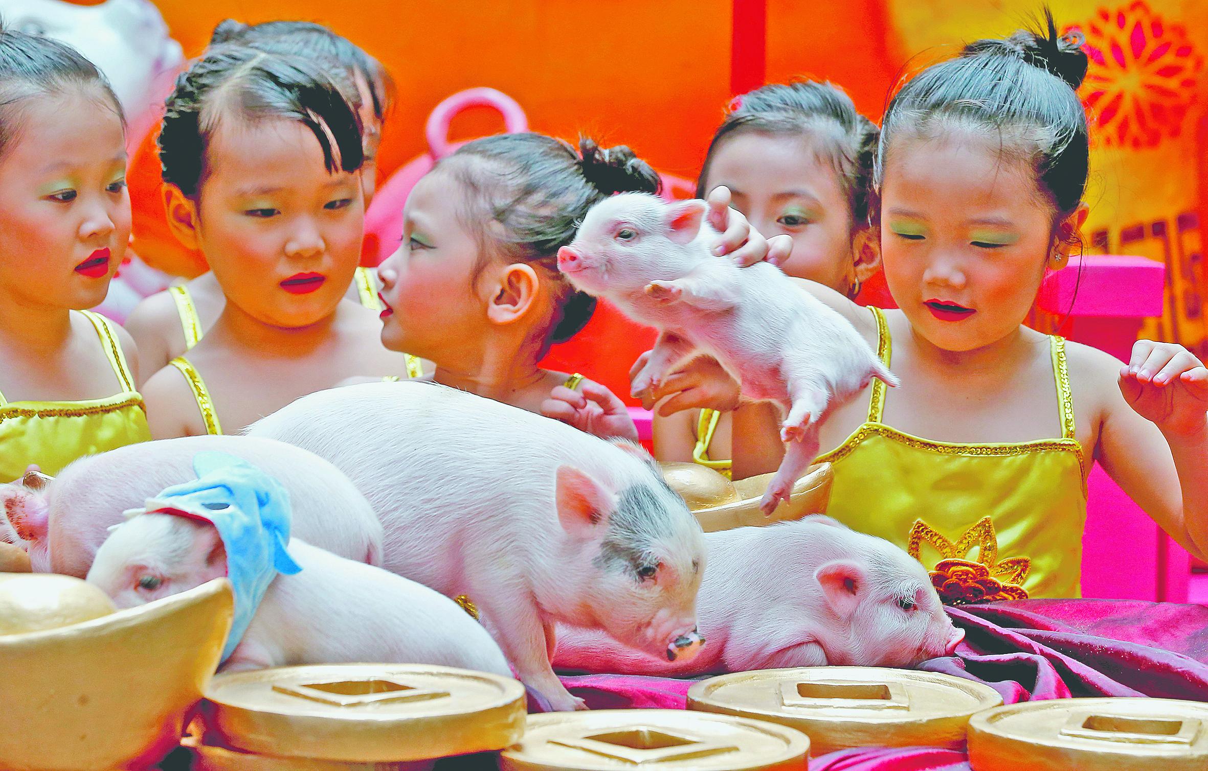Újévköszöntő szerencsehozó törpemalacokkal a manilai kínai negyedben