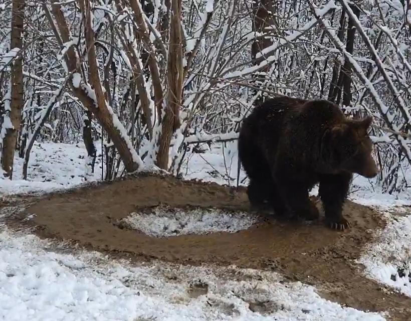 Amíg a medveköreinket rójuk